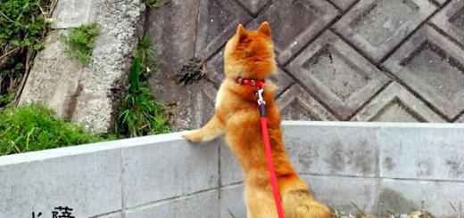 鳥の鳴き声を聞くのも大好き♪豆柴犬「薩摩」