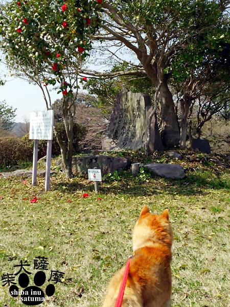 豆柴犬「薩摩」「 斎藤 茂吉 」歌碑見てきたよ♪